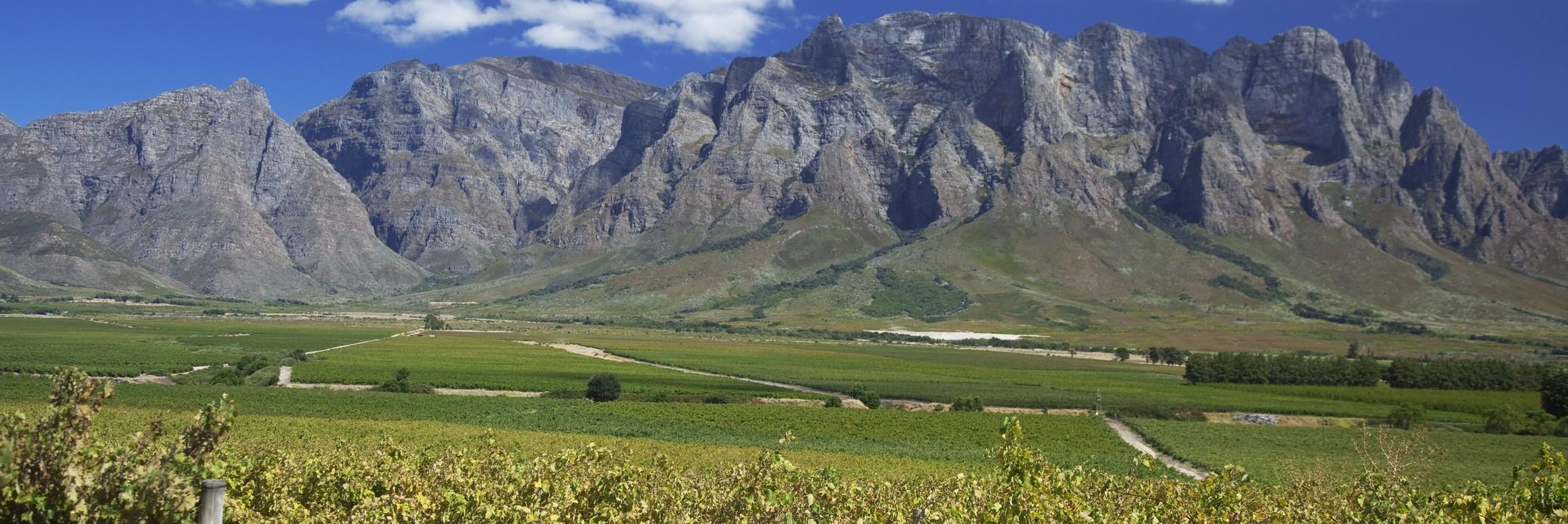 Južná Afrika - Paarl (3)
