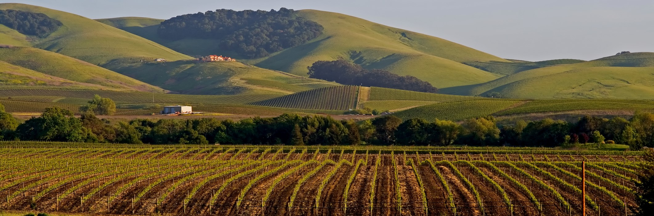 Kalifornia - Napa Valley (2)