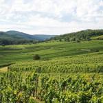 Vignoble Zotzenberg-fra